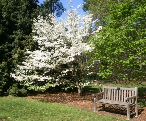 Dogwood Norfolk Botanical Garden