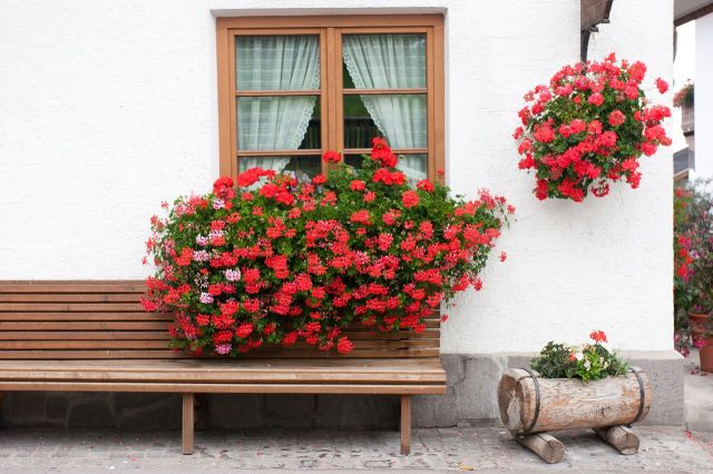 1280-161368380-geranium-flower-window-box-Gardenerdy