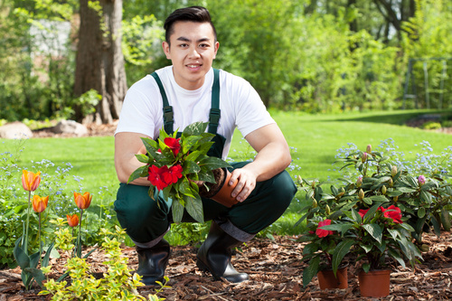 Young-man-planting-flowers-Stock-Photo-FreeDesignFile