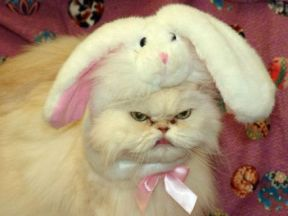 easter-humor-pissed-off-cat-with-bunny-ears-on-i-dont-think-so